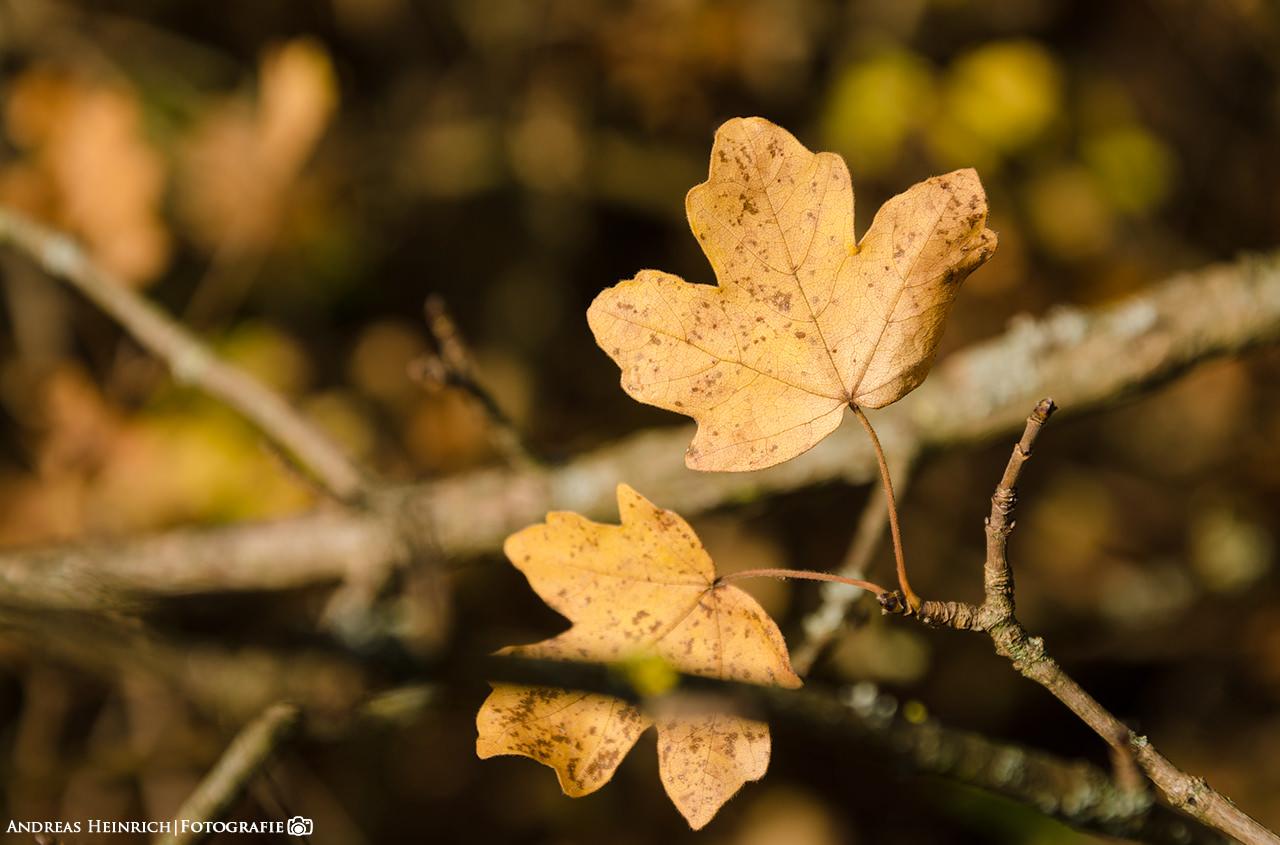 Blätter an einem Busch