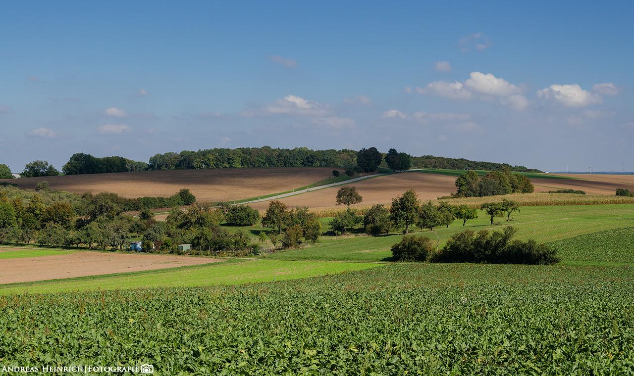 Ein Sommertag in den Feldern bei Dahenfeld.